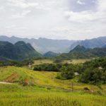Rizières de Pu Luong au moment de la récolte, Vietnam