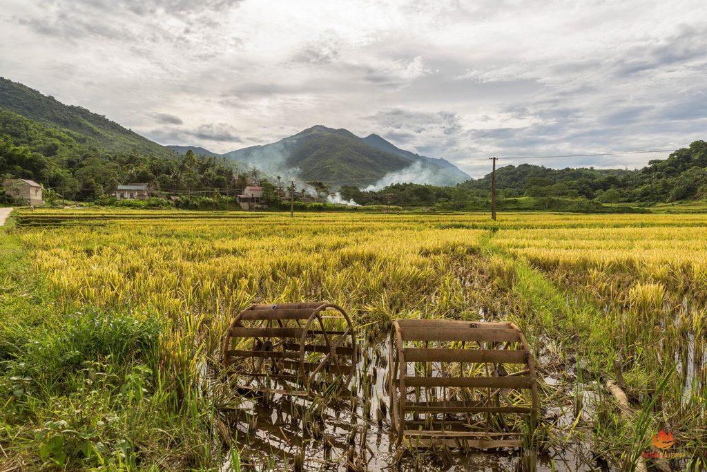 Rizières dans la réserve de Pu Luong, Vietnam