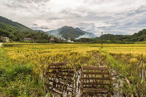 Rizières à Pu Luong, Vietnam