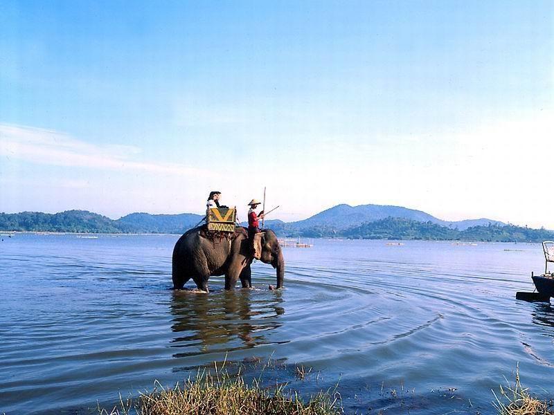 Elephant marchant dans le Lac Lake, Hauts Plateaux du Vietnam