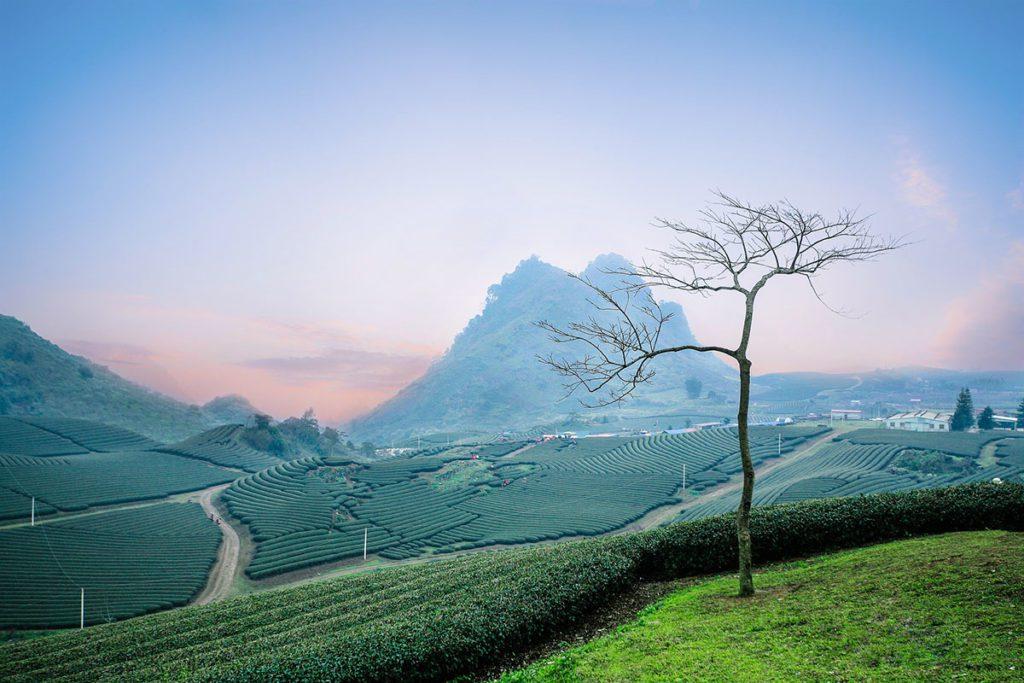 Paysages de Moc Chau Vietnam