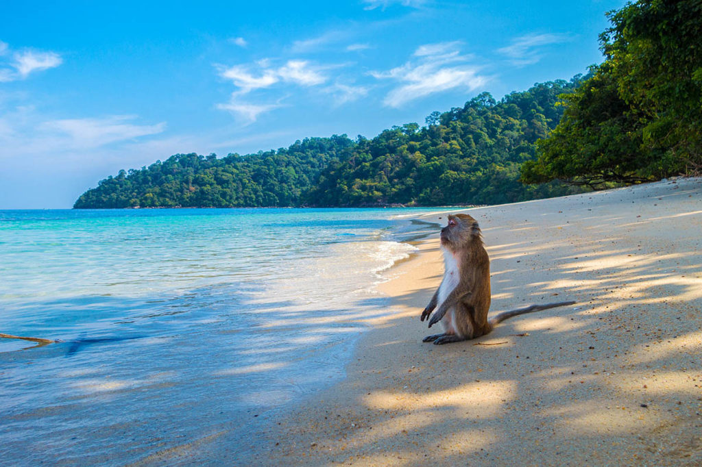 Un singe en pleine méditation sur l'ile aux Singes, Cat Ba