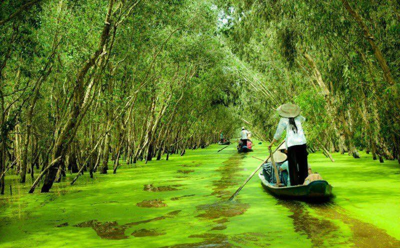 Balade dans la forêt de cajeputiers de Tra Su