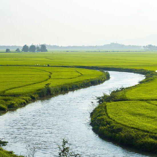 Rivière au milieu des champs de riz au Vietnam