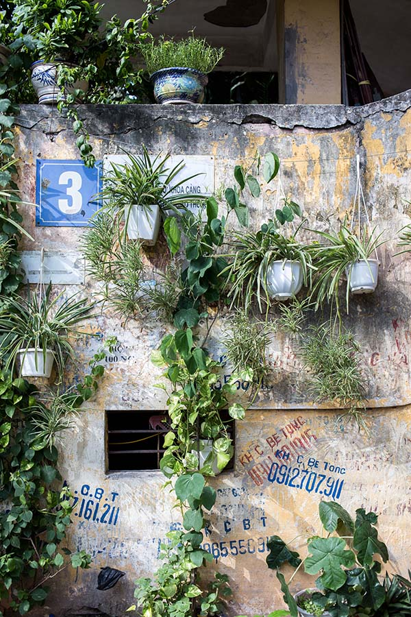 Plantes posées en bas d'un immeuble d'un Khu Tap Thê, Hanoi